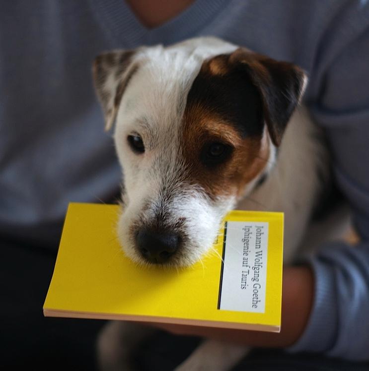 Parson Jack Russell Terrier Buchempfehlungen